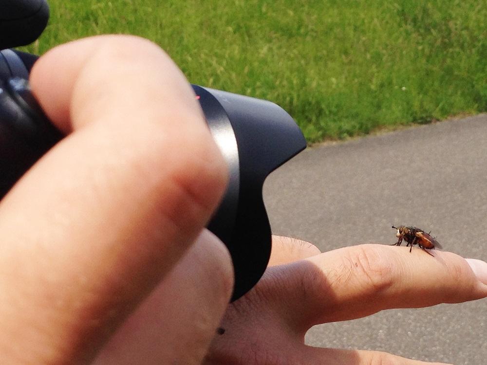 Von Holz, über Libellen und Raupen bis hin zu Schnecken kam uns alles vor die Linse. Aber die pressegeile Fliege war der Hammer!